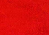 3131 scarlet.jpg