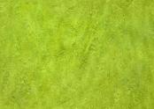 322435 chartreuse.jpg